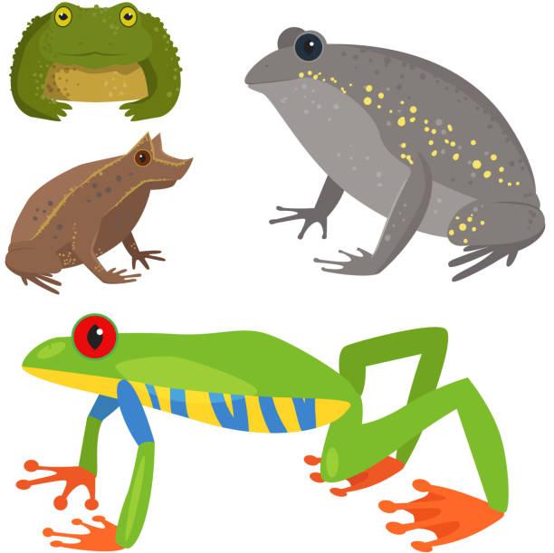 Frog vector cartoon tropical wildlife animal green froggy nature funny illustration toxic toad amphibian vector art illustration
