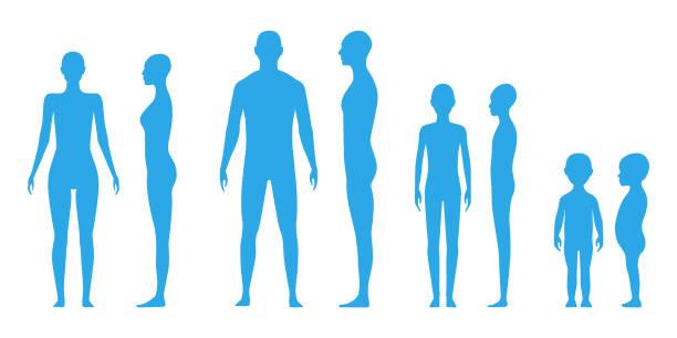 illustrazioni stock, clip art, cartoni animati e icone di tendenza di vista frontale e laterale sagome del corpo umano - il corpo umano