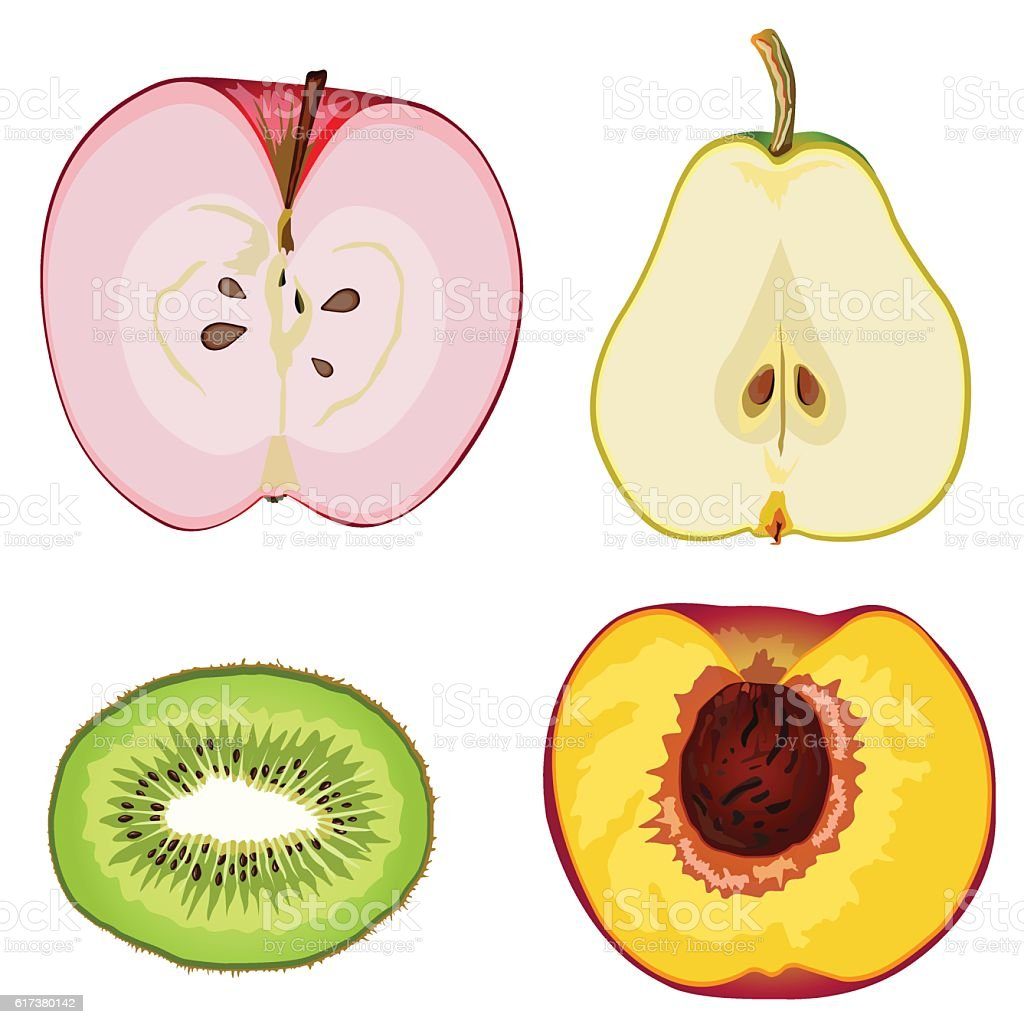 Fruit Anatomy Stock Vector Art & More Images of Apple - Fruit ...