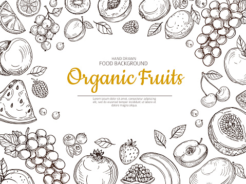 Fruit background. Farmer eco fruits and berries vintage sketch healthy food vector poster