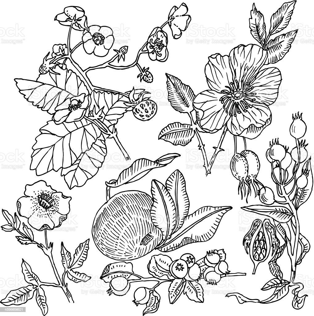 Fruit Background vector art illustration