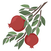 Vector juicy pomegranate on a branch. Green leave and fruits on the white background. Abstract fruit illustration in trendy hand drawn style.