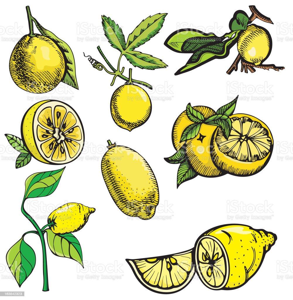 Fruit Illustrations XIV: Lemons (Vector) royalty-free stock vector art