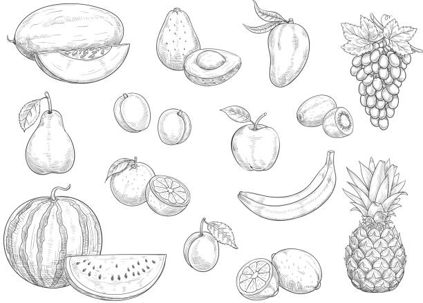 Fruit isolated sketch set for food, juice design Fruit isolated sketches. Apple, orange, banana, lemon, pear and peach, grape, pineapple, kiwi and mango, watermelon, avocado and plum, melon and apricot fruit for organic food and juice design banana drawings stock illustrations