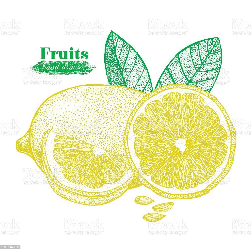 Fruit Lemon with Leaf and Slice Hand Draw Sketch. Vector fruit lemon with leaf and slice hand draw sketch vector – cliparts vectoriels et plus d'images de affiche libre de droits