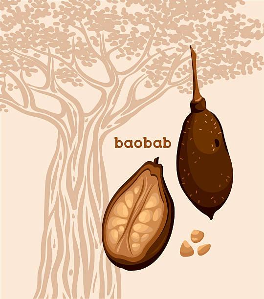 Frutas de baobab y de semillas. - ilustración de arte vectorial