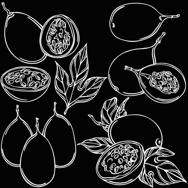 illustrazioni stock, clip art, cartoni animati e icone di tendenza di fruit of the fruit vector illustration, vector - illustrazioni di passiflora