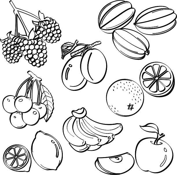 Fruit Set A set of sketching of fruits isolated on a white background. It contains hi-res JPG, PDF and Illustrator 9 files. fruit clipart stock illustrations