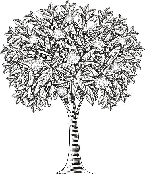 Best Fruit Tree Illustrations, Royalty-Free Vector Graphics