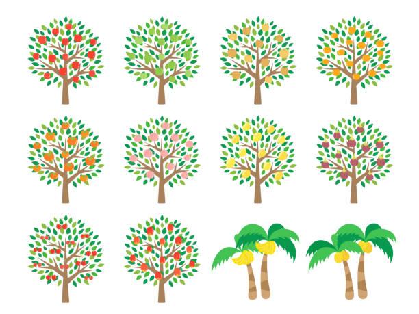 stockillustraties, clipart, cartoons en iconen met fruit boom - fruitboom
