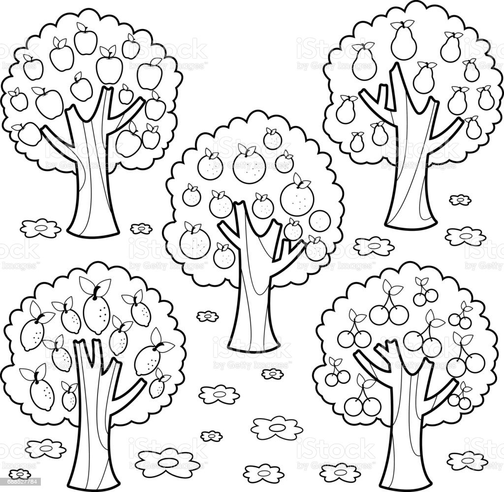 Fruit Trees Black And White Coloring Book Page Stock Vector Art ...