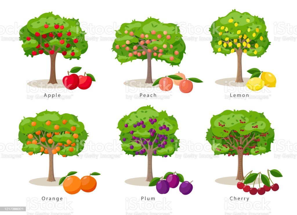 Fruit Trees Set Of Illustrations In Flat Cartoon Gesign Isolated On White Background Fruit Trees Farm Icons Concept Vector Infographic Elements Stock Illustration Download Image Now Istock See more of quarter pine tree farm on facebook. fruit trees set of illustrations in flat cartoon gesign isolated on white background fruit trees farm icons concept vector infographic elements stock illustration download image now istock