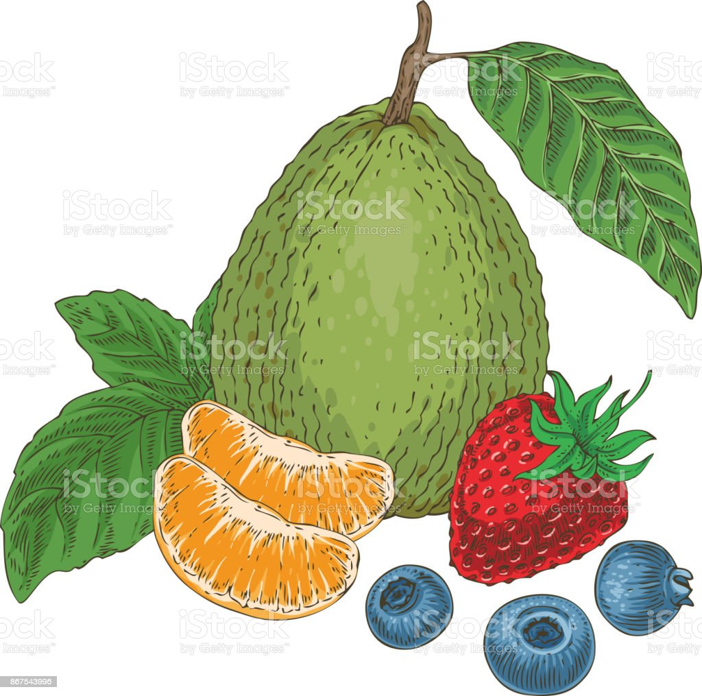 Fruits and Berries Composition vector art illustration
