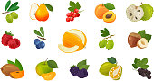Fruits and berries, set of colored icons. Food concept. Vector illustration isolated on white background