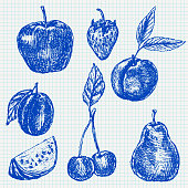 Fruits. Blue hand drawn sketch on lined paper background. Vector illustration