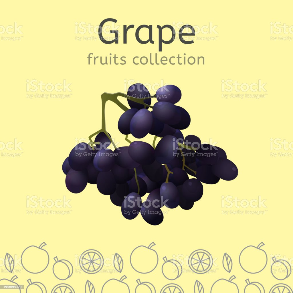 Fruits collection image vector art illustration