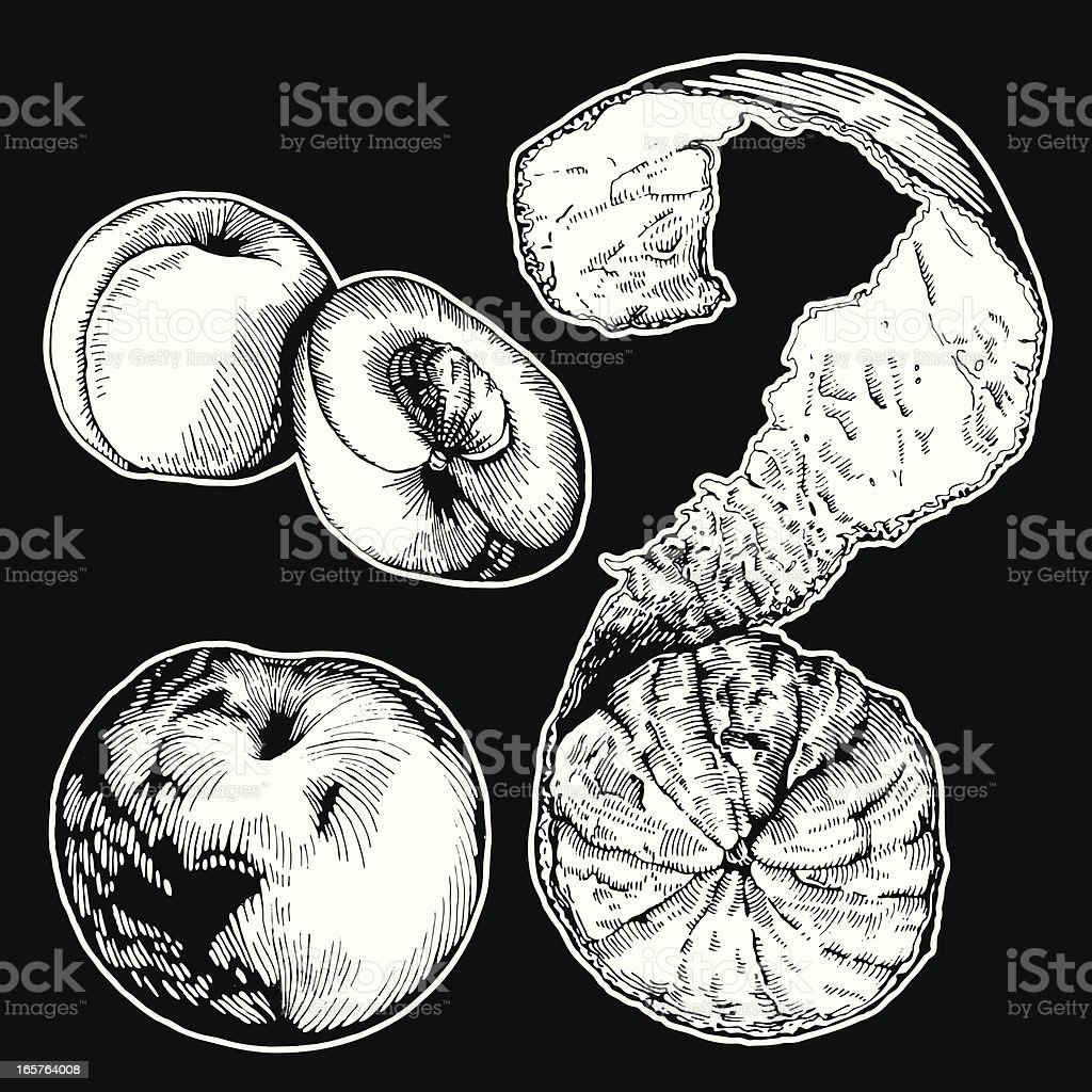 Fruits, Ink Drawing royalty-free stock vector art