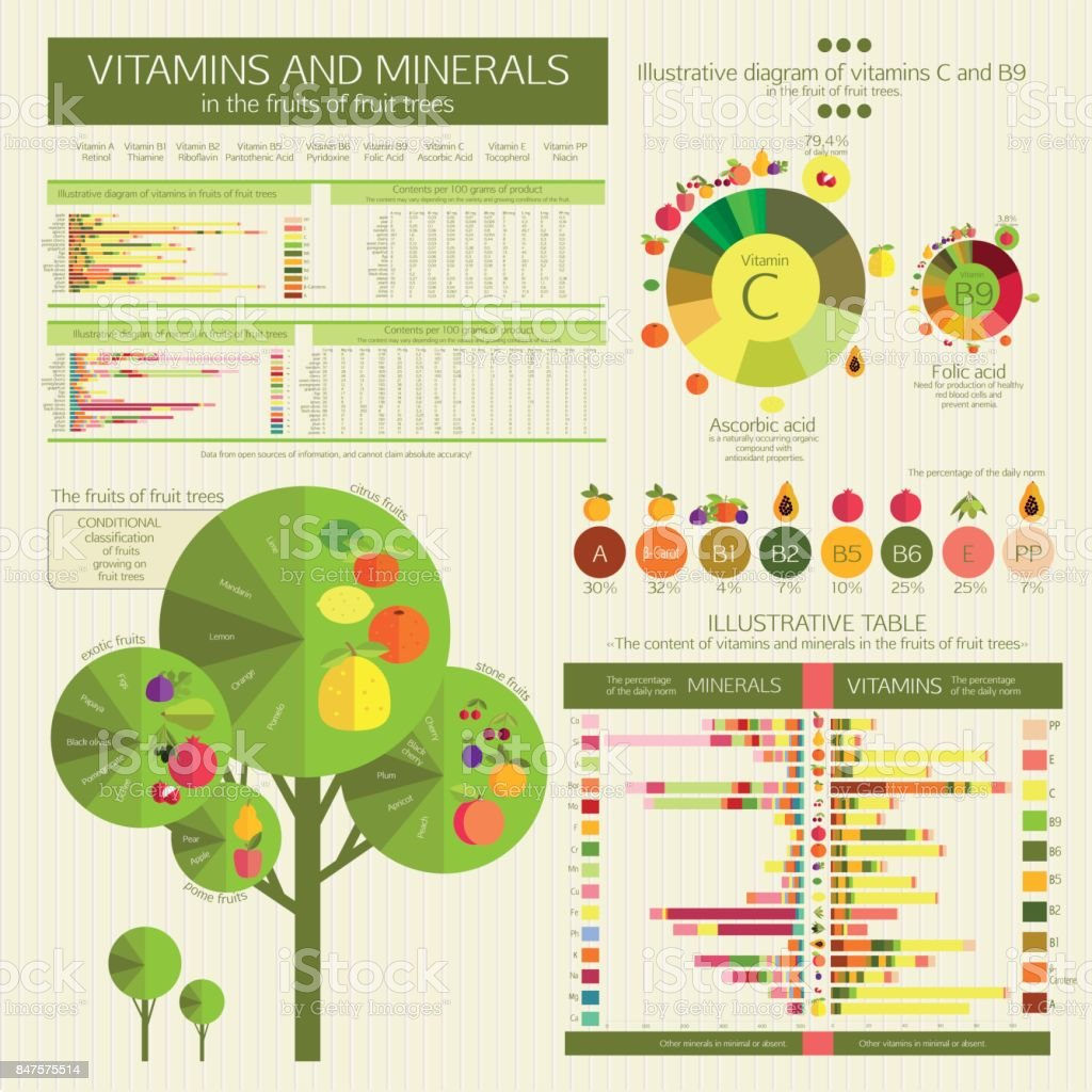 fruits of fruit trees. Comparative analysis. vector art illustration