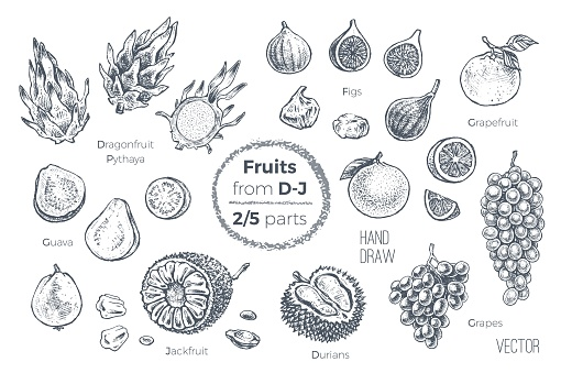 Fruits set. Engraved style hand drawn vector icons. Sketches of tropical fruits from D to J for design of juice packages and smoothie recipes. 2 of 5 parts