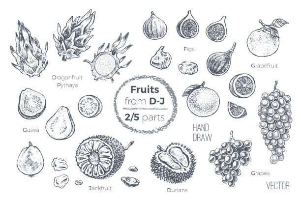 Fruits set. Engraved style hand drawn vector icons. Sketches of tropical fruits from D to J for design of juice packages and smoothie recipes. 2 of 5 parts Fruits hand drawn sketch icons set. Organic food fig stock illustrations
