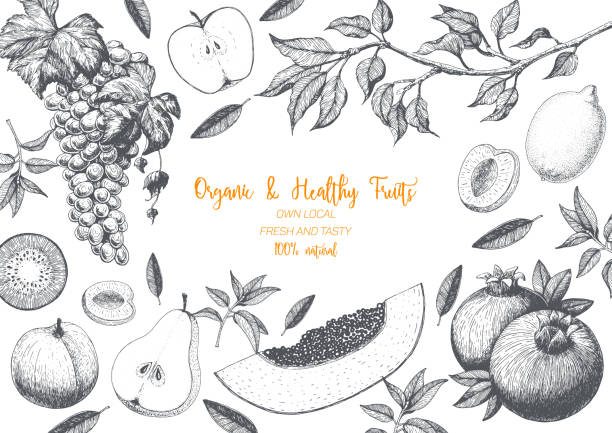 ilustrações de stock, clip art, desenhos animados e ícones de fruits top view frame with papaya, pear, pomegranate, kiwi, peach, apple, grapes. farmers market menu design. healthy food poster. vintage hand drawn sketch, vector illustration. linear graphic. - kiwi