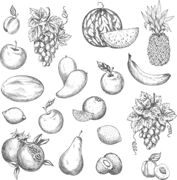 Fruits vector sketch isolated icons Fruits sketch. Vector isolated icons of melon and watermelon, tropical pineapple and kiwi. Sketched juicy grape bunch, apricot, pomegranate, pear and apple. Fresh lemon, banana banana drawings stock illustrations