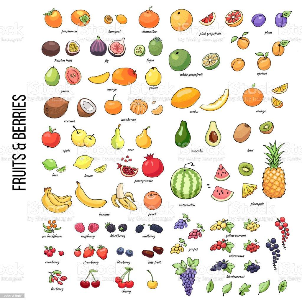 FruitsShutter2 vector art illustration
