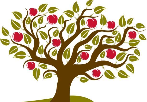 Árbol frutal con maduras manzanas aisladas sobre fondo blanco. Orgánica y eco alimentos idea vector de la imagen. - ilustración de arte vectorial