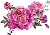 Watercolor Floral Decoration made of Fuchsia Peonies, Buds and Foliage. Botanical Illustration in Vintage Style. Wedding Decoration Isolated on White.