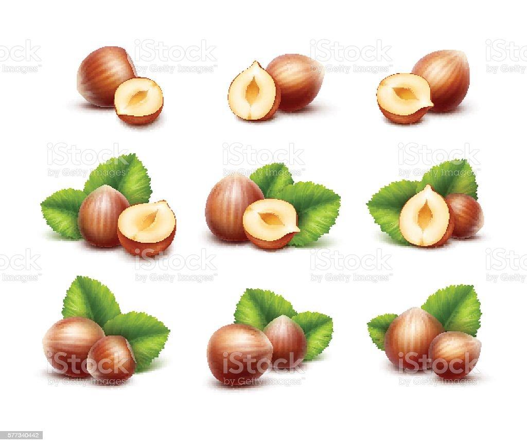 Full and Half Peeled Unpeeled Realistic Hazelnuts with Leaves vector art illustration
