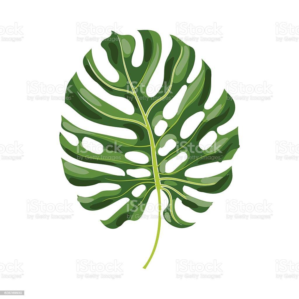 Full leaf of monstera palm tree, vector illustration - ilustración de arte vectorial