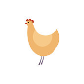 Full length of brown hen - side view of standing chicken in flat style.