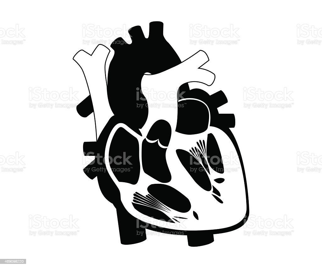 Funktion Und Definition Menschliches Herz Silhouette Stock Vektor ...
