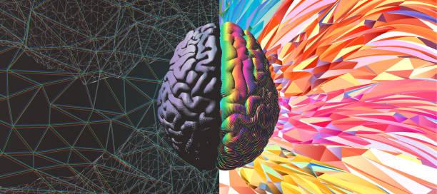 stockillustraties, clipart, cartoons en iconen met functionele en kracht van de hersenen illustratie - creativiteit
