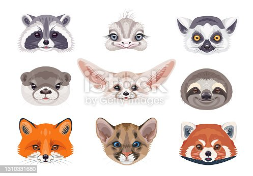 Funny animal faces isolated on white