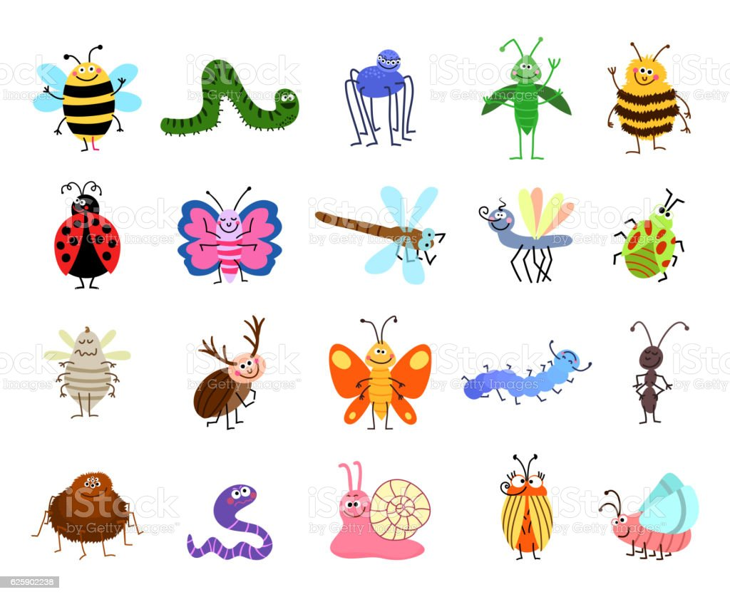 Insects What Are