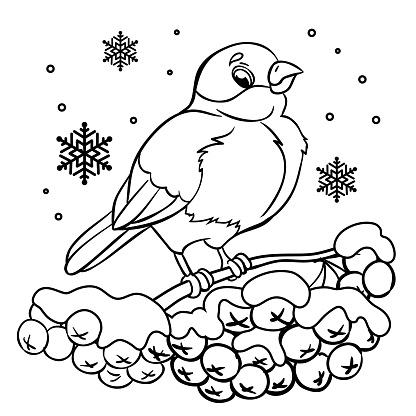 Funny bullfinche and rowan tree under the snowfall.