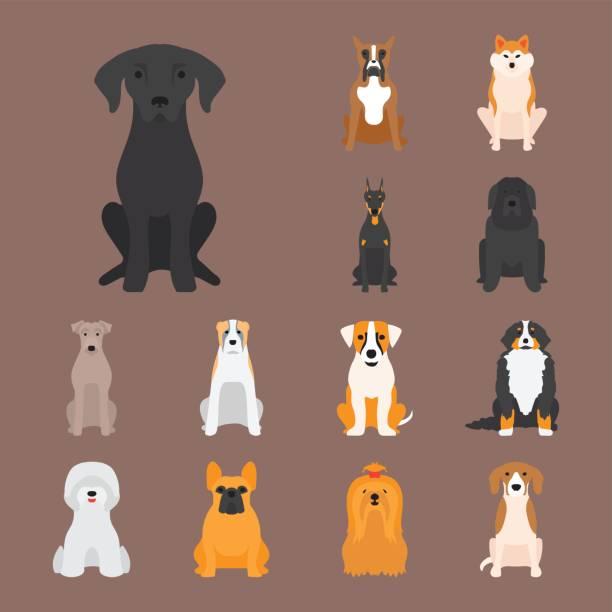 lustige cartoon hund charakter brot cartoon welpen freundlich liebenswert eckzahn vektor-illustration - collie stock-grafiken, -clipart, -cartoons und -symbole