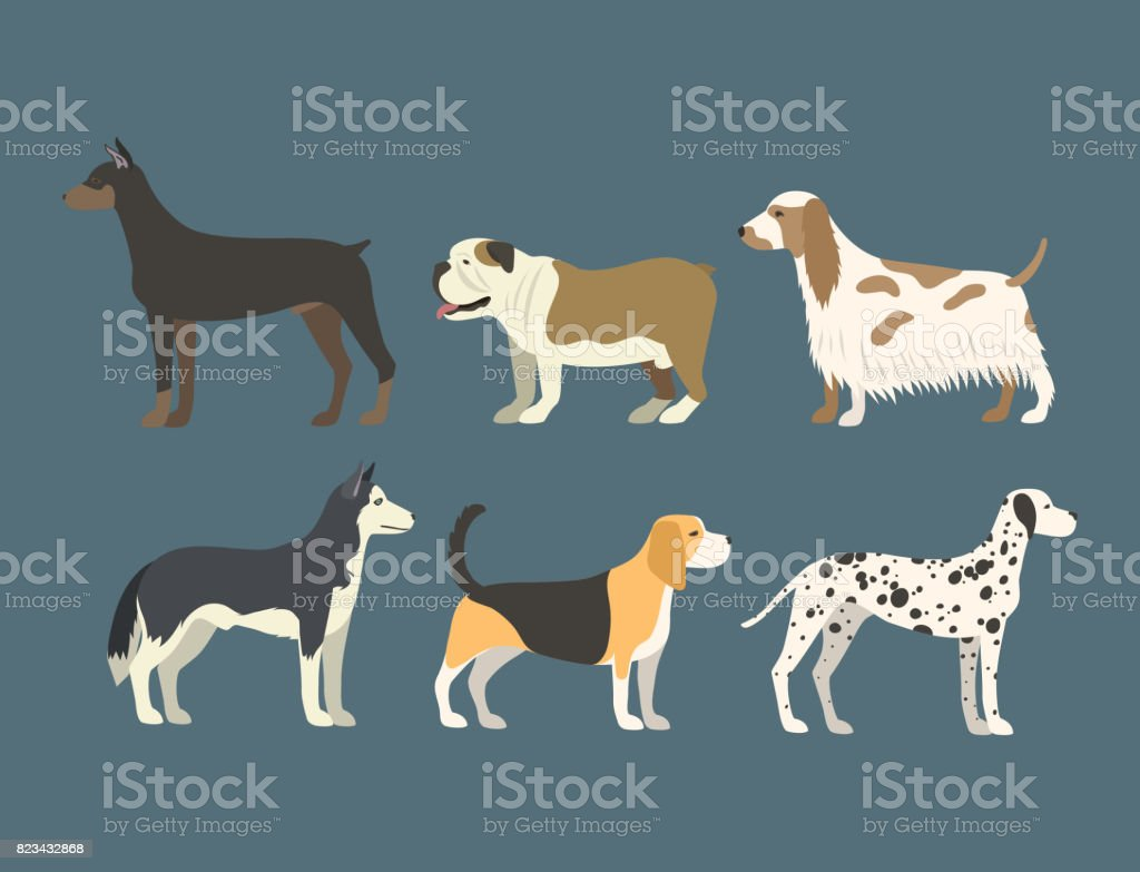 Funny cartoon dog character bread in flat style puppy pet animal doggy vector illustration vector art illustration