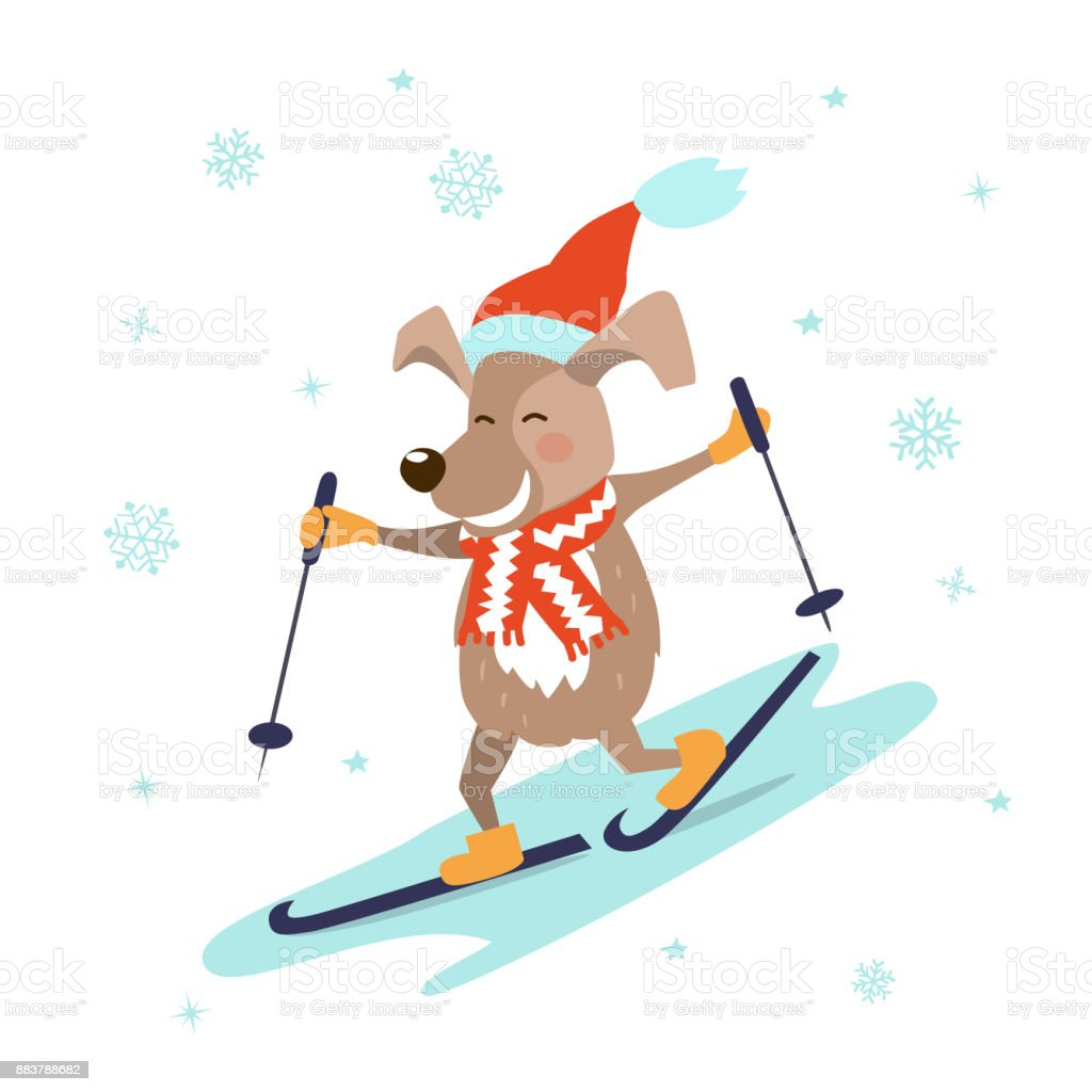 Lustige Comichund In Weihnachtsmütze Und Schal Skifahren Isoliert
