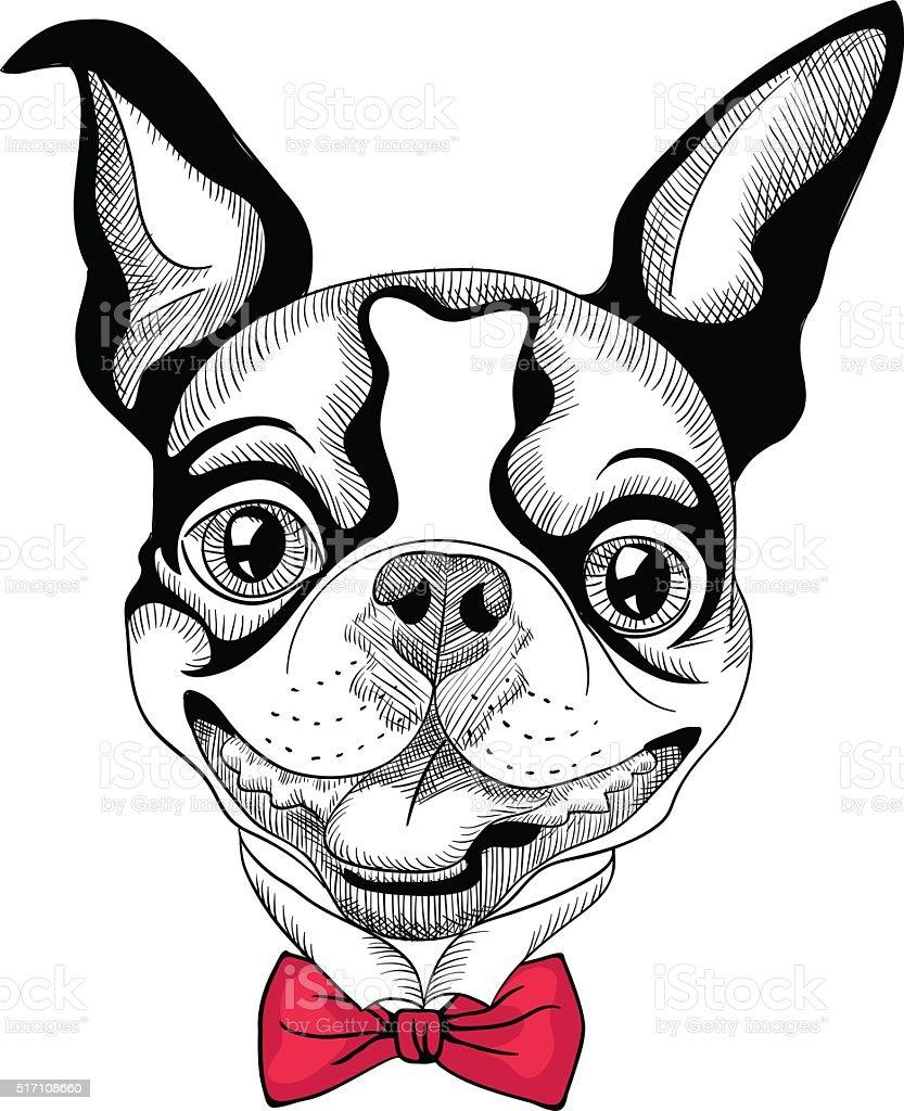 funny cartoon hipster Boston Terrier breed smiling vector art illustration