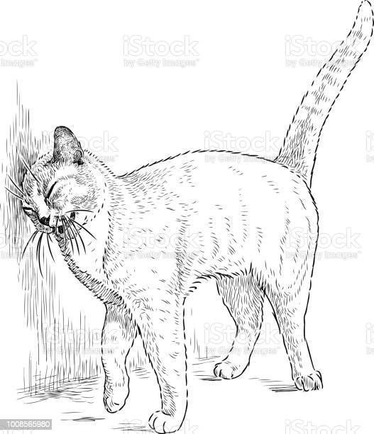 Funny cat rubs an ear about a wall vector id1008565980?b=1&k=6&m=1008565980&s=612x612&h=cnbra lprzapnsdq4ev2gpsgfgzy njye8s2 avrqwi=