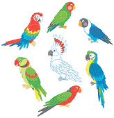 Funny colorful parrots