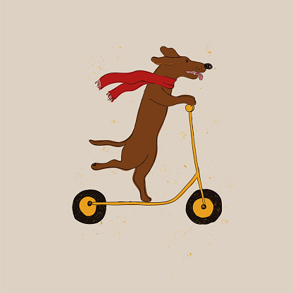 Funny Dachshund Dog Riding Scooter