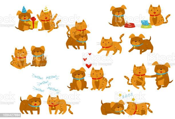 Funny dog and cat set cute domestic pet animals cartoon characters in vector id1034427694?b=1&k=6&m=1034427694&s=612x612&h=vplgppozv3qpydbnyylxtqecnmh2mhl8suksma i3sy=