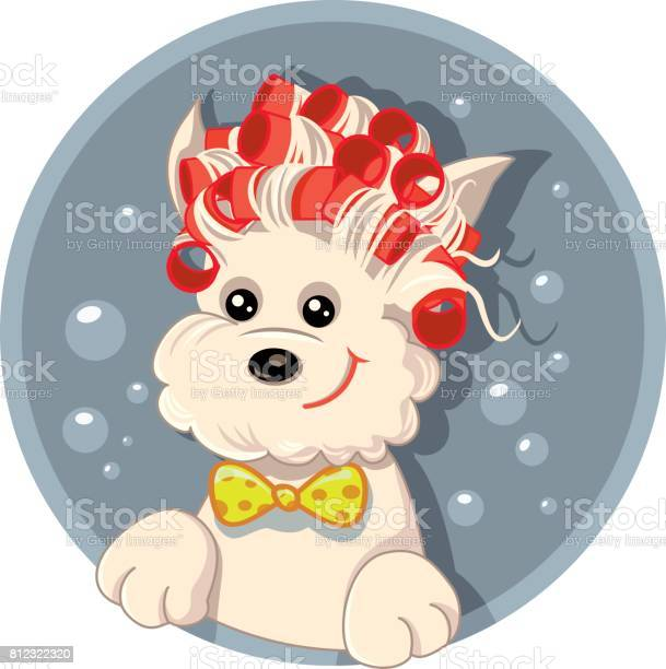 Funny dog with hair rollers pet salon vector cartoon vector id812322320?b=1&k=6&m=812322320&s=612x612&h=vqgfxe16tpgesqqk fiokqgsruzrlpsmphoiy0s u5g=