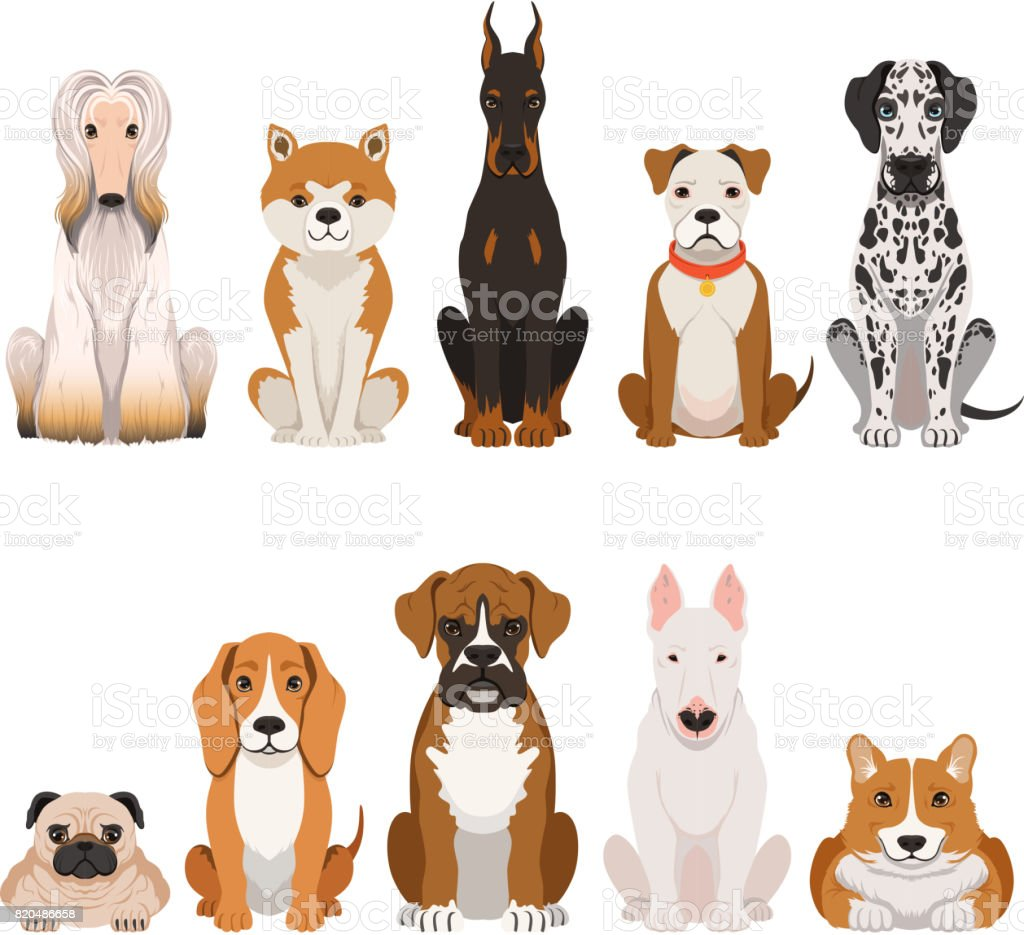 Funny dogs illustrations in cartoon style. Domestic pets vector art illustration