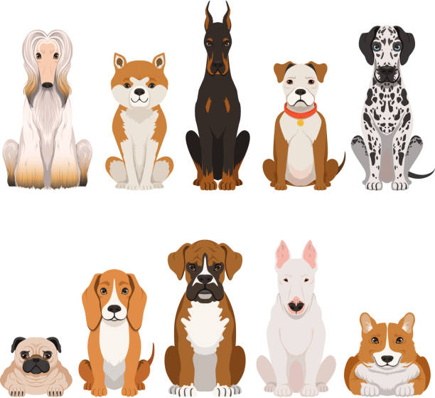 lustige hunde illustrationen im cartoon-stil. haustiere - schoßhunde stock-grafiken, -clipart, -cartoons und -symbole