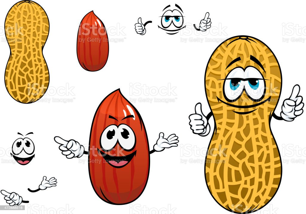 Funny kernel and pod of peanut characters vector art illustration