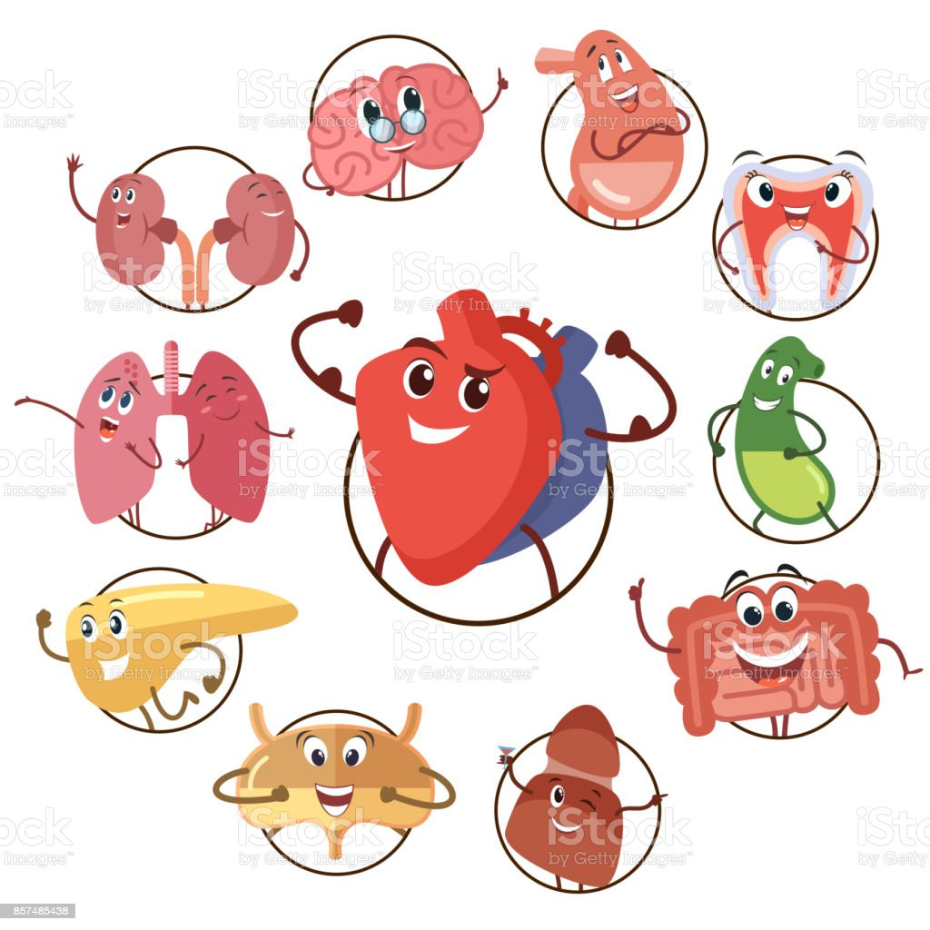 Funny medical icons of organs, heart, lungs, stomach. Set of round avatars cartoon characters of internal organs. Vector illustrations vector art illustration